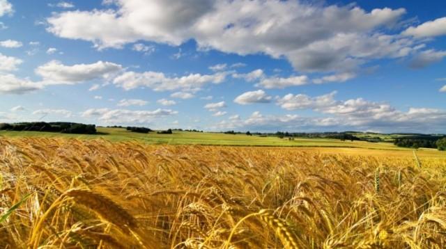 agro-campo-trigo-1-715x400