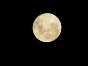 luna1-3