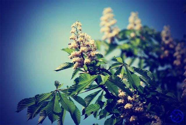 flores-de-bach-contra-insomnio