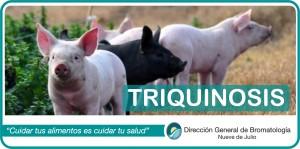 triquinosis30